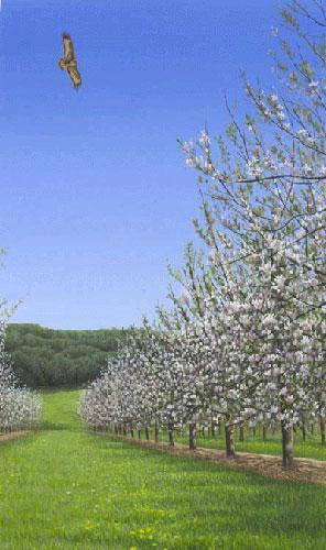 Common-buzzard-apple-blosso