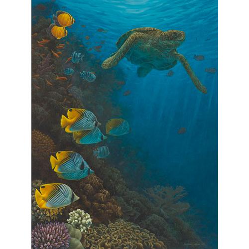 Coral reef, Oman