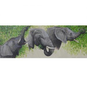 elephant sequencee