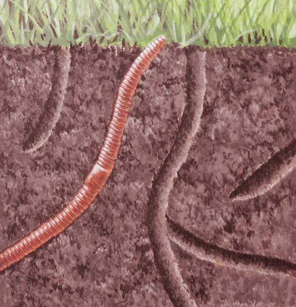 Earthworm underground